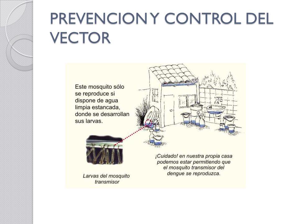 PREVENCION Y CONTROL DEL VECTOR