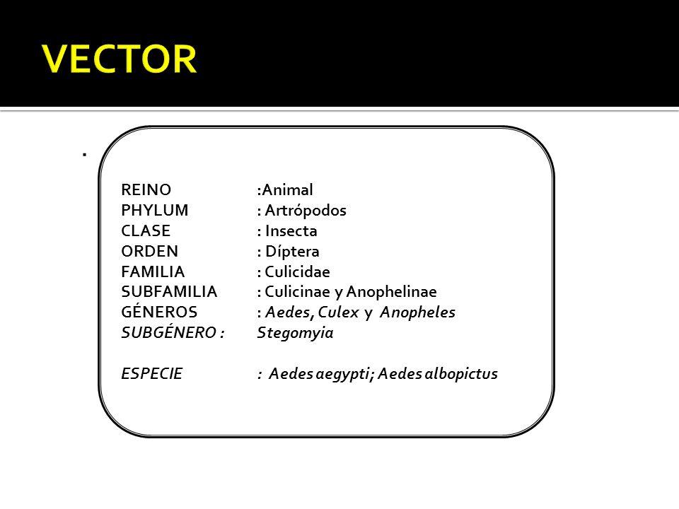 VECTOR . REINO :Animal PHYLUM : Artrópodos CLASE : Insecta