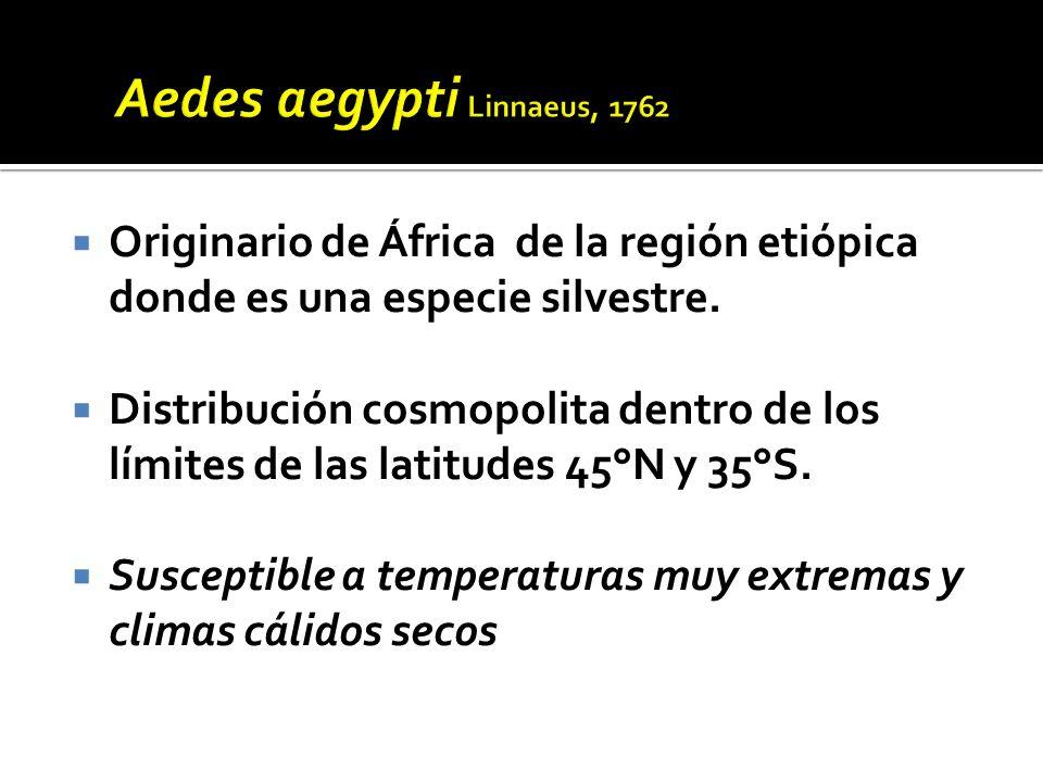 Aedes aegypti Linnaeus, 1762