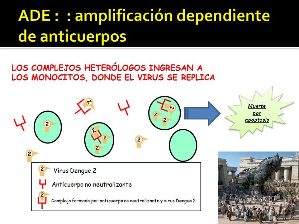 ADE : : amplificación dependiente de anticuerpos