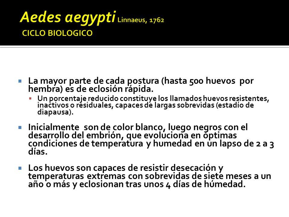Aedes aegypti Linnaeus, 1762 CICLO BIOLOGICO