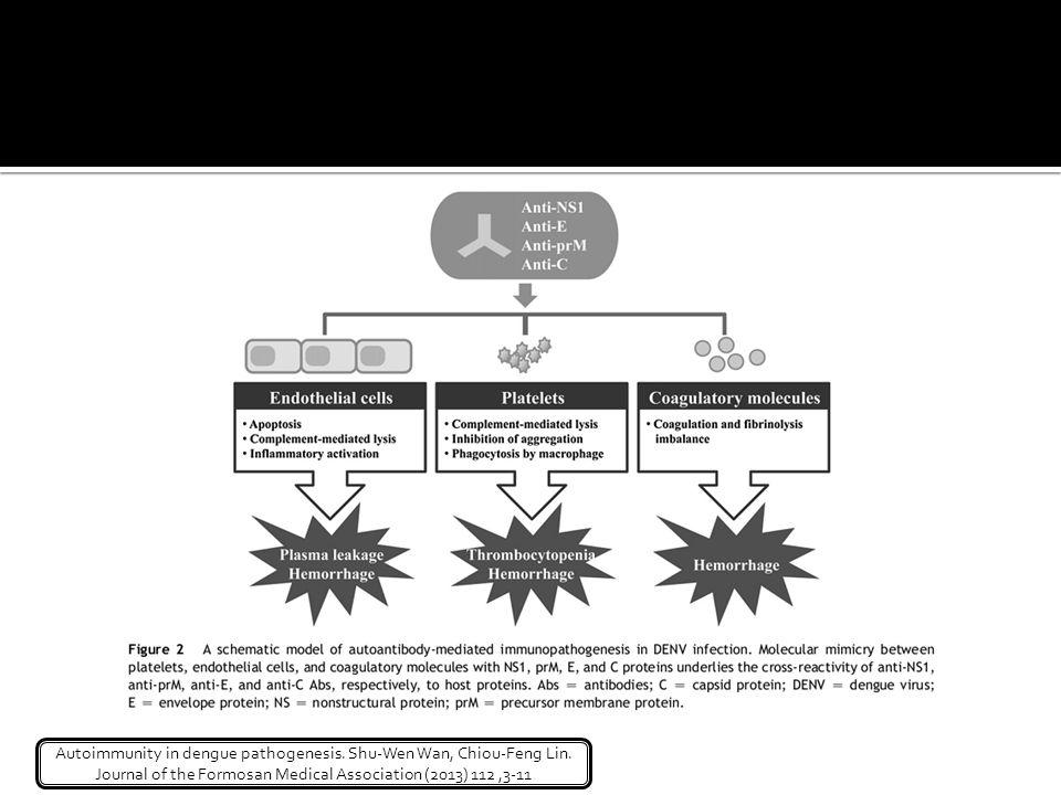 Además, anti-DENV NS1 Abs indujo células endoteliales para expresar IL-6, IL-8, MCP-1, y la molécula de adhesión intercelular-1. La activación de las células endoteliales por los anti-DENV NS1 Abs demostró la participación de los Abs anti-NS1 DENV en la vasculopatía de la infección por DENV