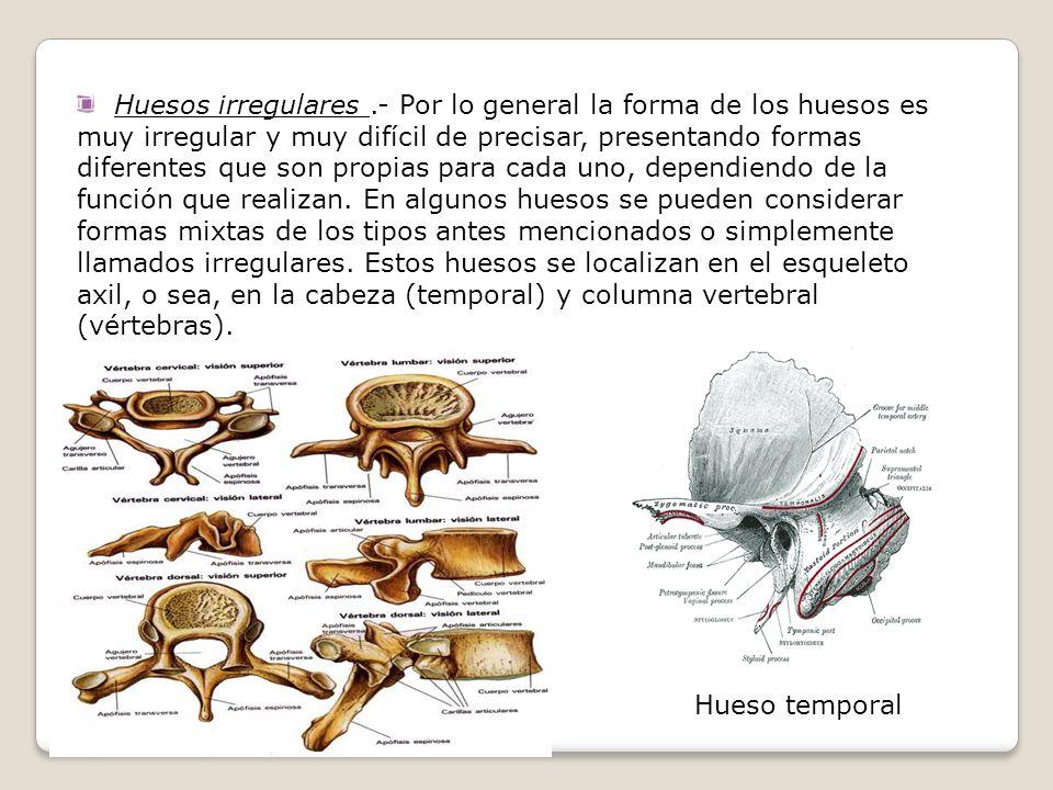 Huesos irregulares .- Por lo general la forma de los huesos es muy irregular y muy difícil de precisar, presentando formas diferentes que son propias para cada uno, dependiendo de la función que realizan. En algunos huesos se pueden considerar formas mixtas de los tipos antes mencionados o simplemente llamados irregulares. Estos huesos se localizan en el esqueleto axil, o sea, en la cabeza (temporal) y columna vertebral (vértebras).