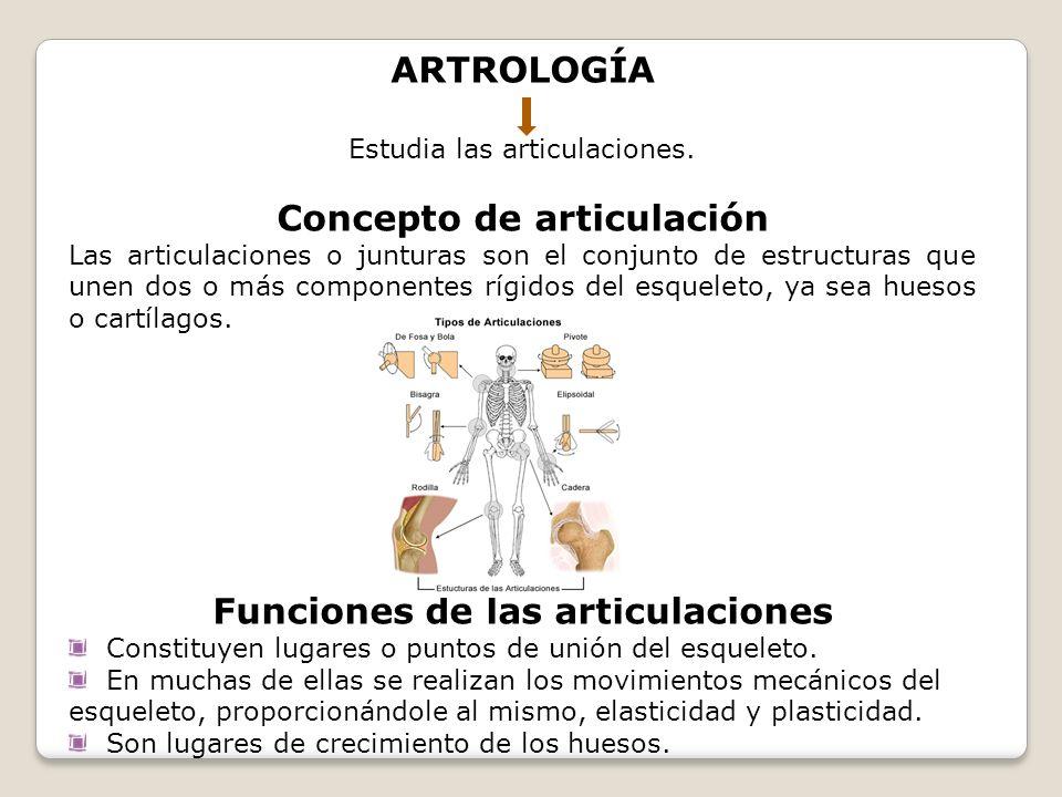 Concepto de articulación Funciones de las articulaciones