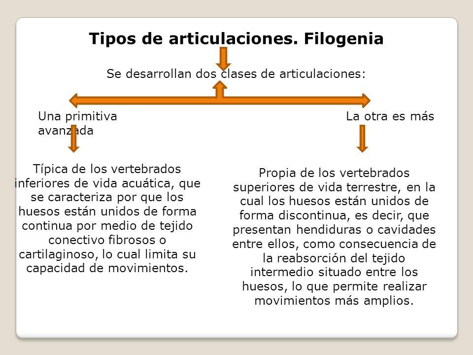 Tipos de articulaciones. Filogenia