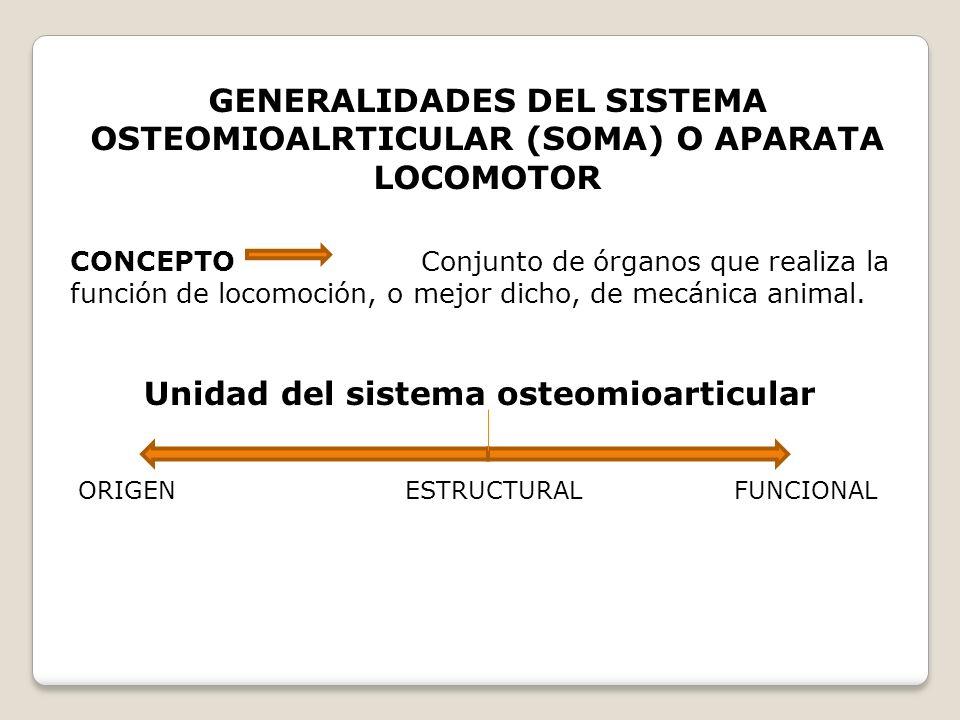 Unidad del sistema osteomioarticular