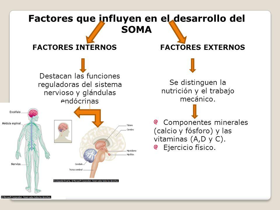 Factores que influyen en el desarrollo del SOMA