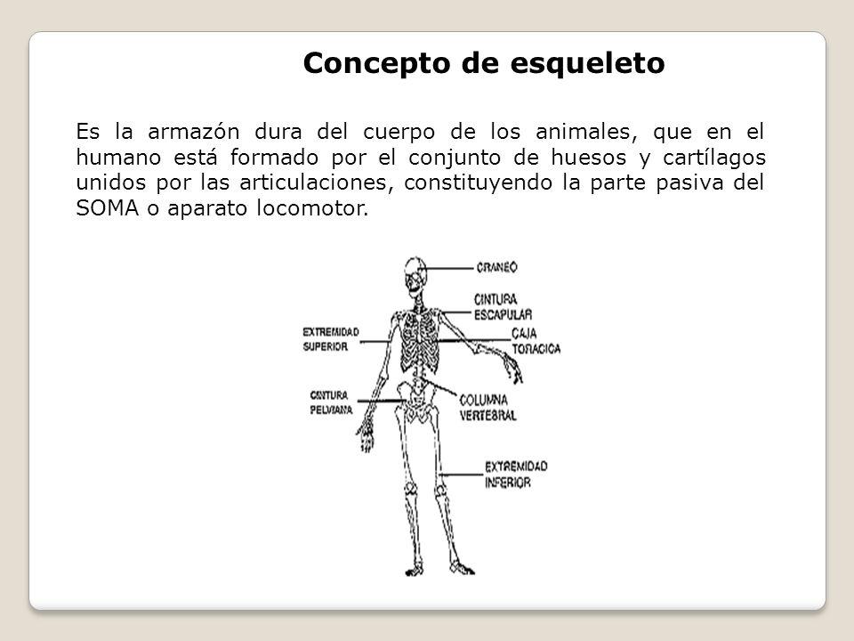 Concepto de esqueleto