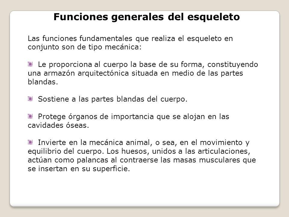 Funciones generales del esqueleto
