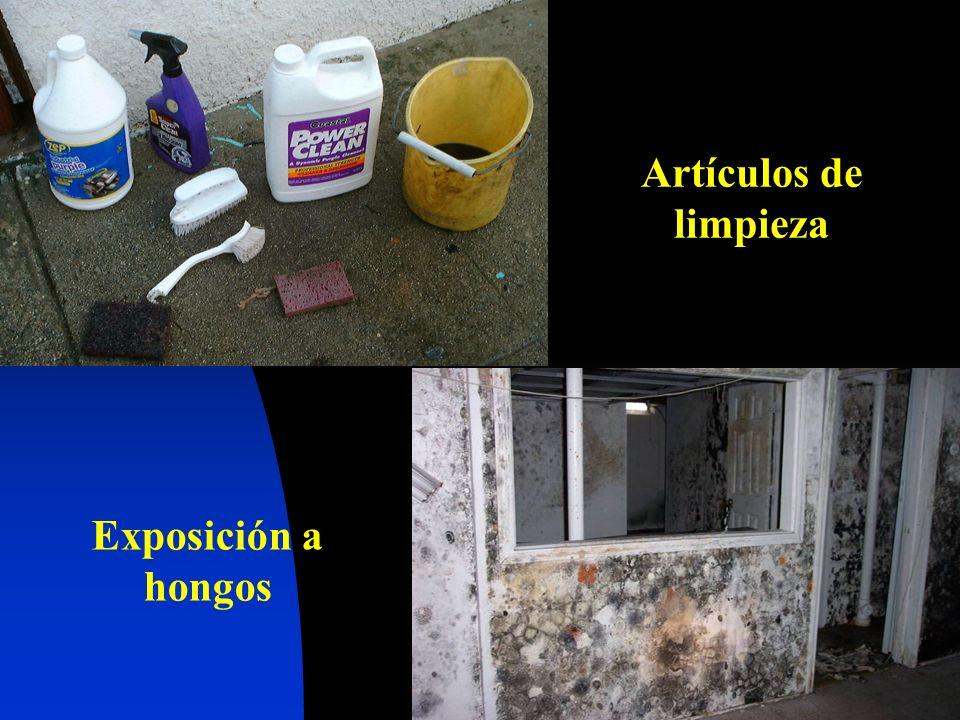 Artículos de limpieza Exposición a hongos