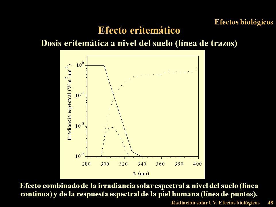 Dosis eritemática a nivel del suelo (línea de trazos)