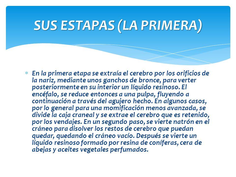 SUS ESTAPAS (LA PRIMERA)