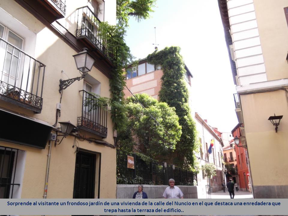 Sorprende al visitante un frondoso jardín de una vivienda de la calle del Nuncio en el que destaca una enredadera que trepa hasta la terraza del edificio..