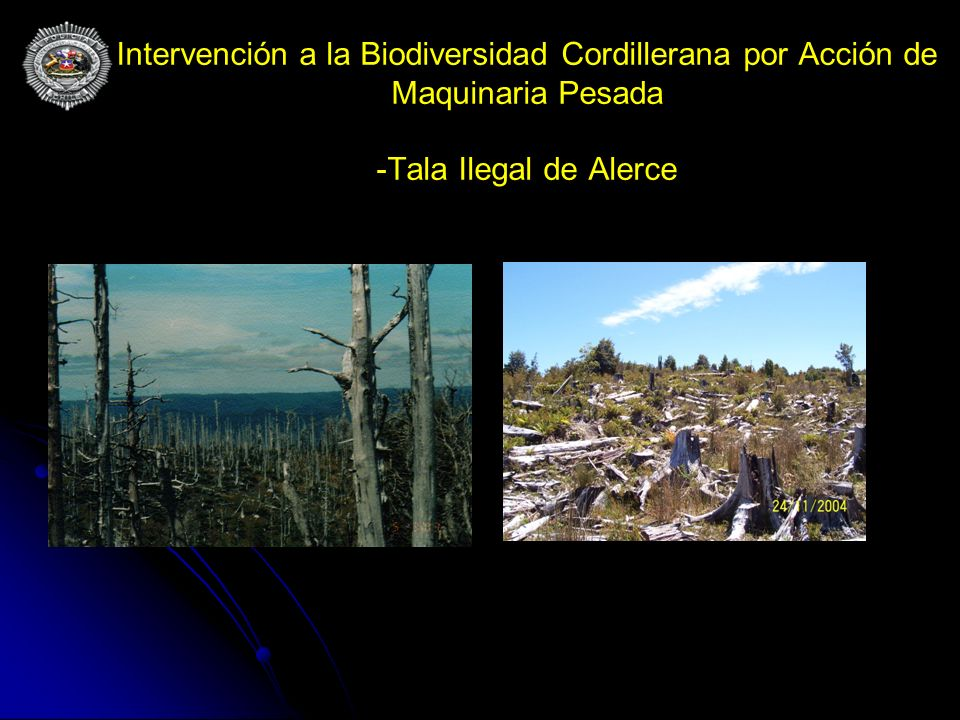 Intervención a la Biodiversidad Cordillerana por Acción de Maquinaria Pesada -Tala Ilegal de Alerce
