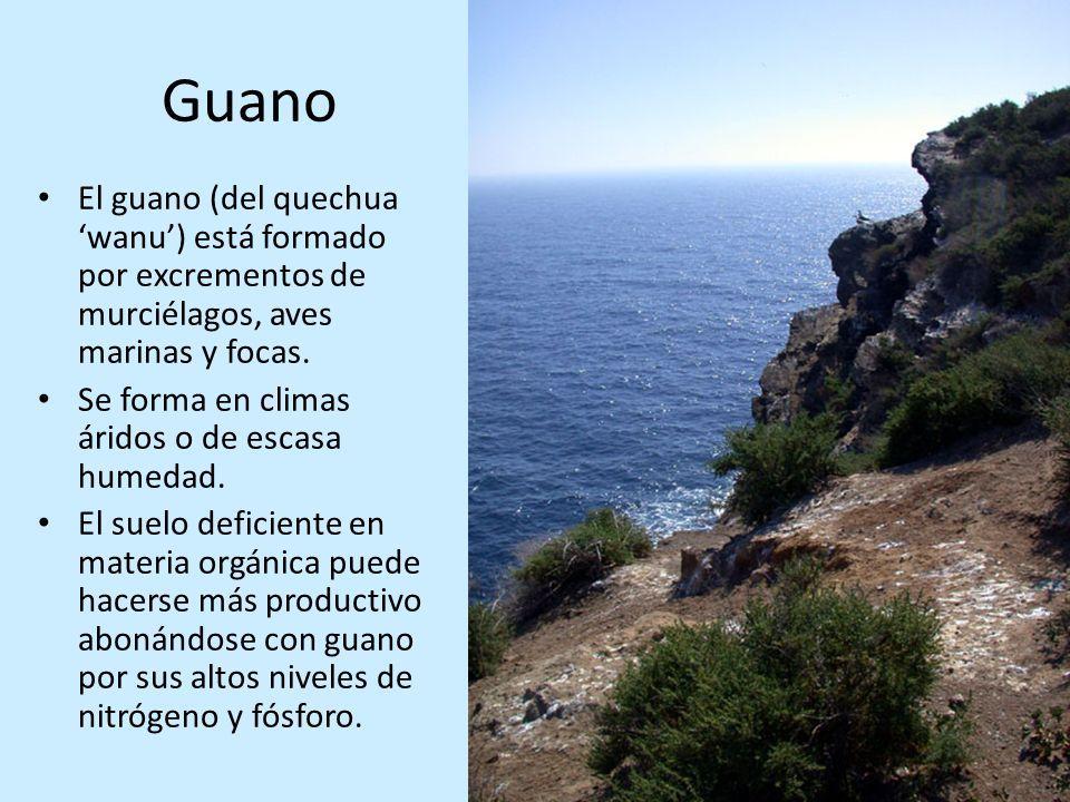 Guano El guano (del quechua 'wanu') está formado por excrementos de murciélagos, aves marinas y focas.