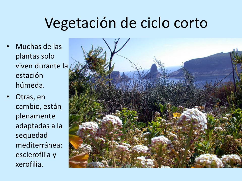 Vegetación de ciclo corto
