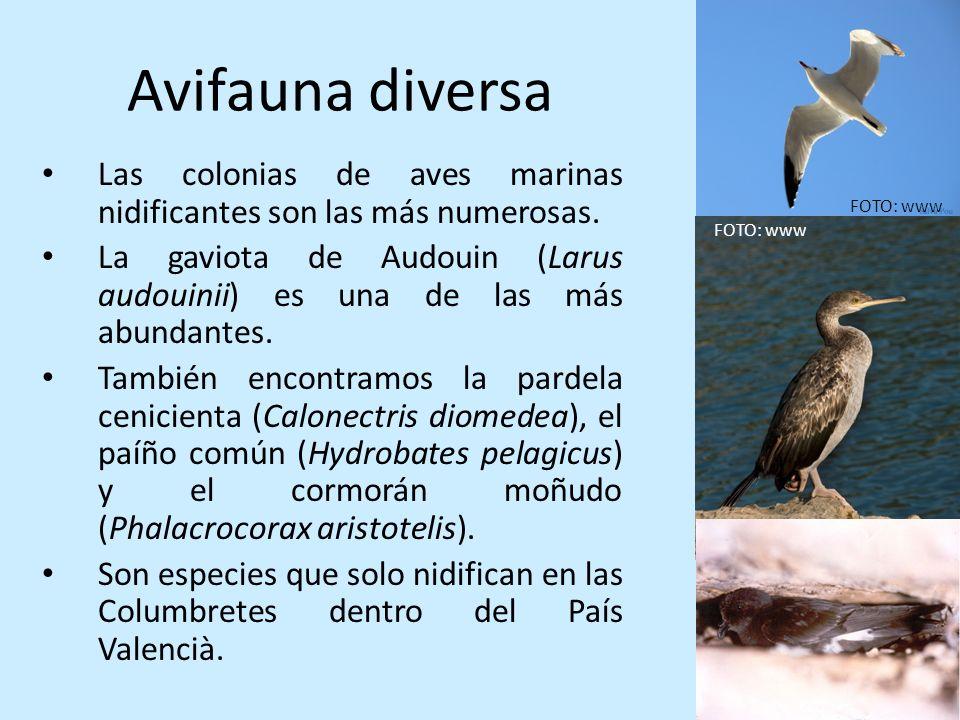Avifauna diversa Las colonias de aves marinas nidificantes son las más numerosas.