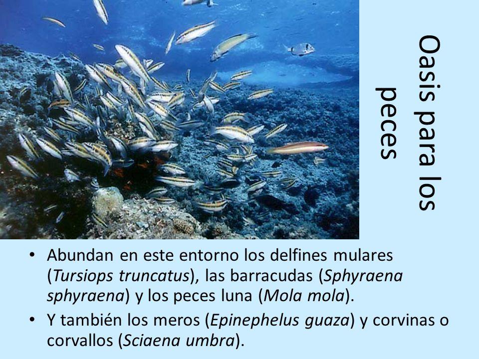 Oasis para los peces