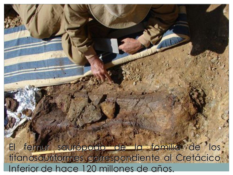 El femur saurópodo de la familia de los titanosauriformes correspondiente al Cretácico Inferior de hace 120 millones de años.