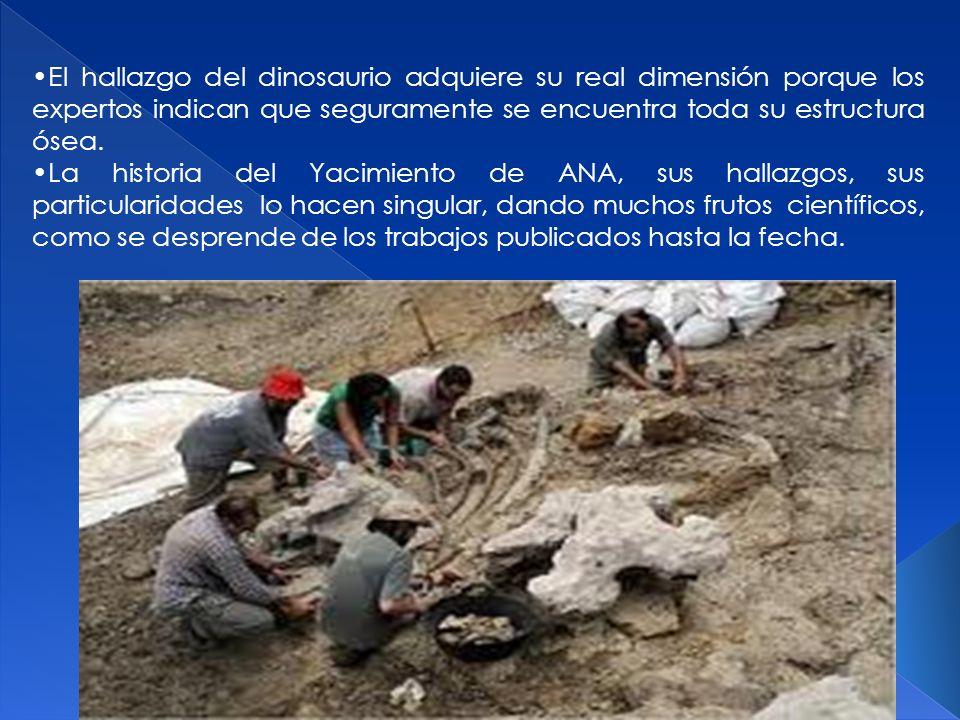 El hallazgo del dinosaurio adquiere su real dimensión porque los expertos indican que seguramente se encuentra toda su estructura ósea.