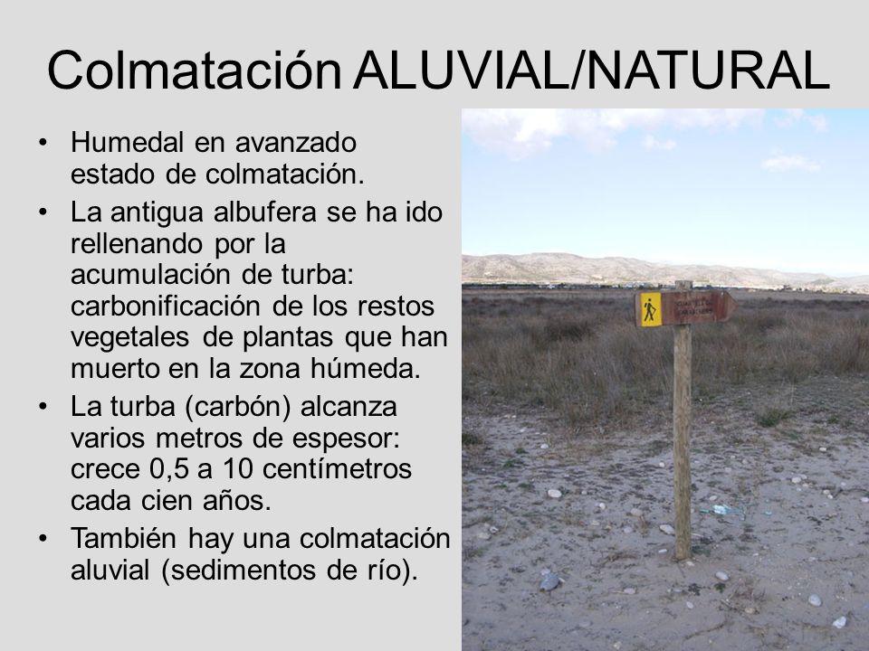 Colmatación ALUVIAL/NATURAL