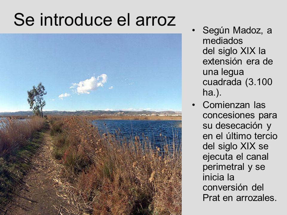 Se introduce el arrozSegún Madoz, a mediados del siglo XIX la extensión era de una legua cuadrada (3.100 ha.).