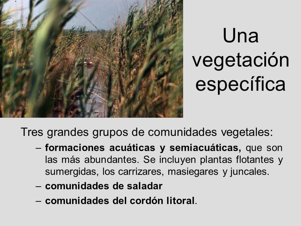 Una vegetación específica