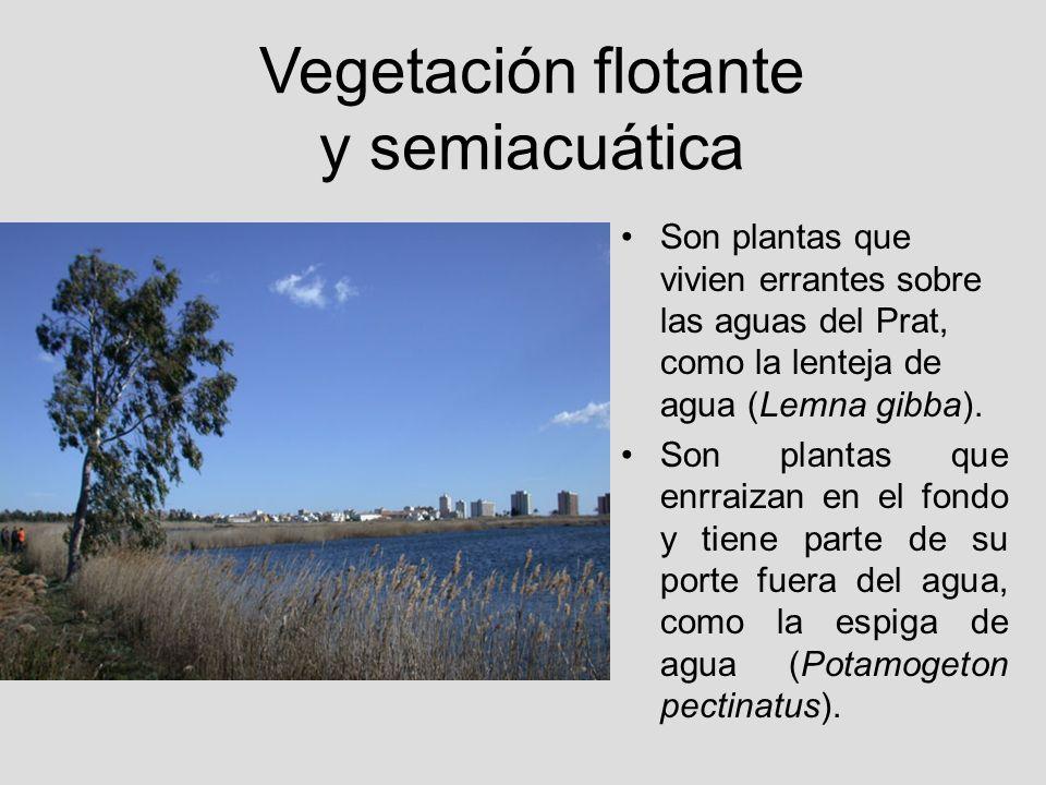 Vegetación flotante y semiacuática