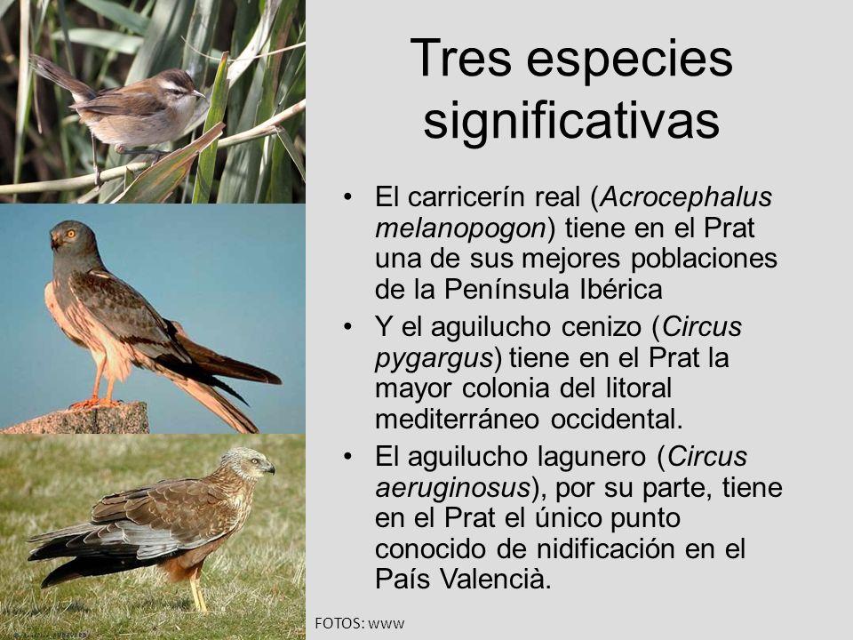 Tres especies significativas