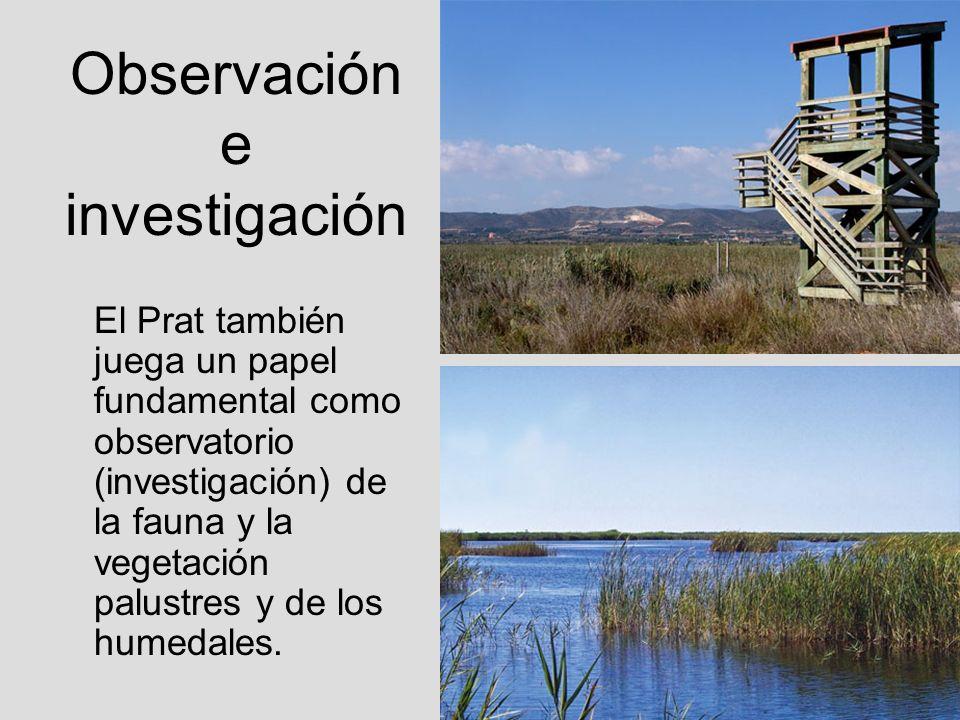 Observación e investigación