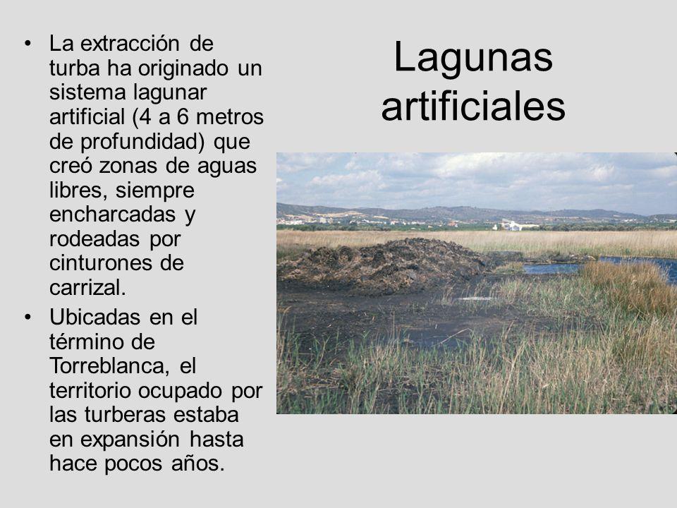 Lagunas artificiales