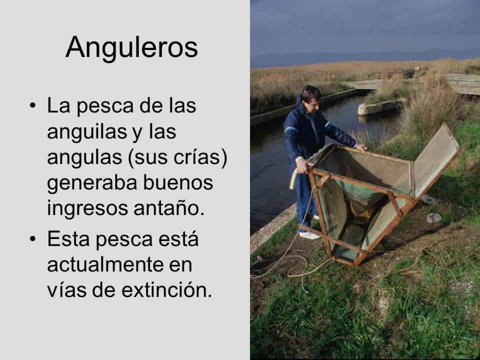 AngulerosLa pesca de las anguilas y las angulas (sus crías) generaba buenos ingresos antaño.