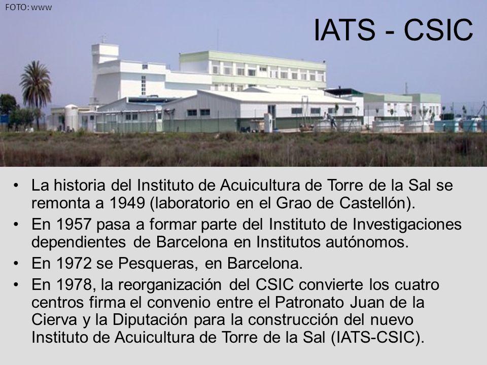 FOTO: wwwIATS - CSIC. La historia del Instituto de Acuicultura de Torre de la Sal se remonta a 1949 (laboratorio en el Grao de Castellón).