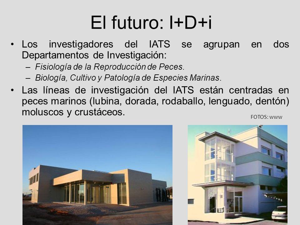 El futuro: I+D+i Los investigadores del IATS se agrupan en dos Departamentos de Investigación: Fisiología de la Reproducción de Peces.