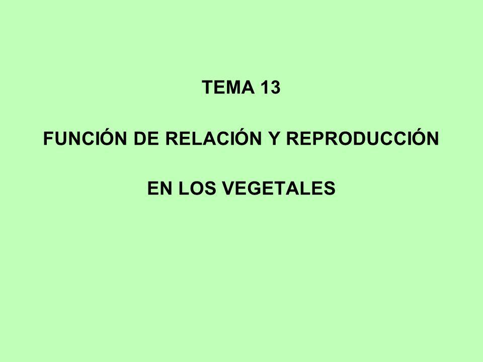 FUNCIÓN DE RELACIÓN Y REPRODUCCIÓN EN LOS VEGETALES