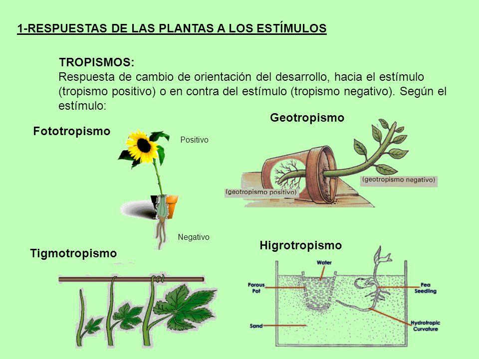 1-RESPUESTAS DE LAS PLANTAS A LOS ESTÍMULOS