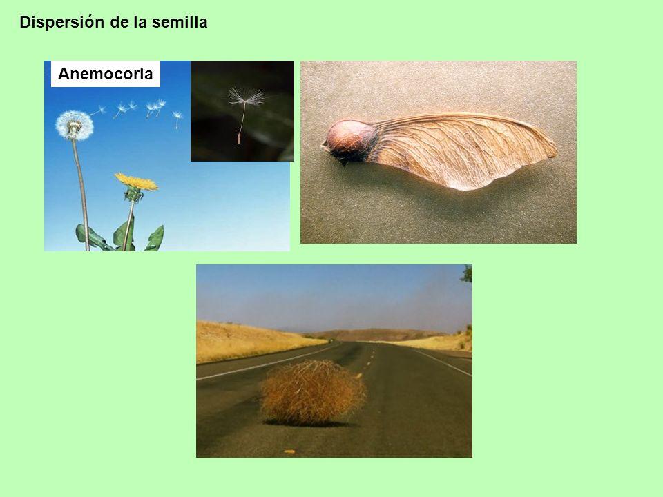Dispersión de la semilla
