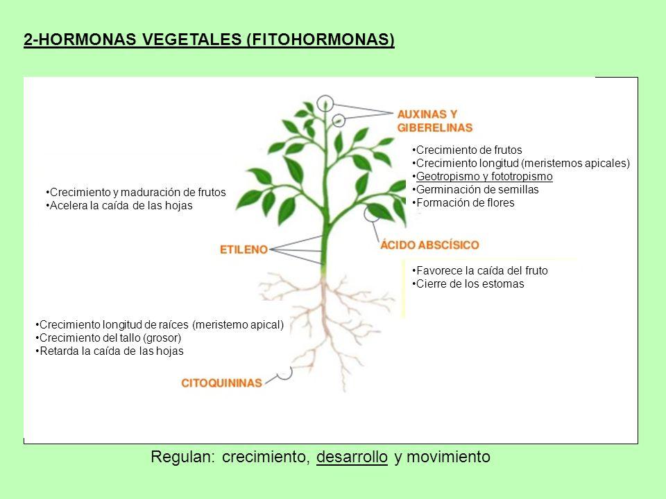 2-HORMONAS VEGETALES (FITOHORMONAS)