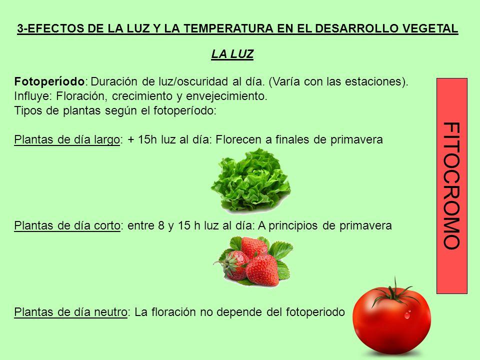 3-EFECTOS DE LA LUZ Y LA TEMPERATURA EN EL DESARROLLO VEGETAL