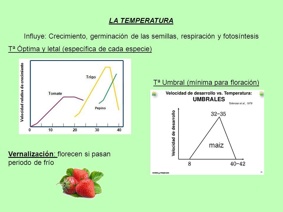 LA TEMPERATURA Influye: Crecimiento, germinación de las semillas, respiración y fotosíntesis. Tª Óptima y letal (específica de cada especie)