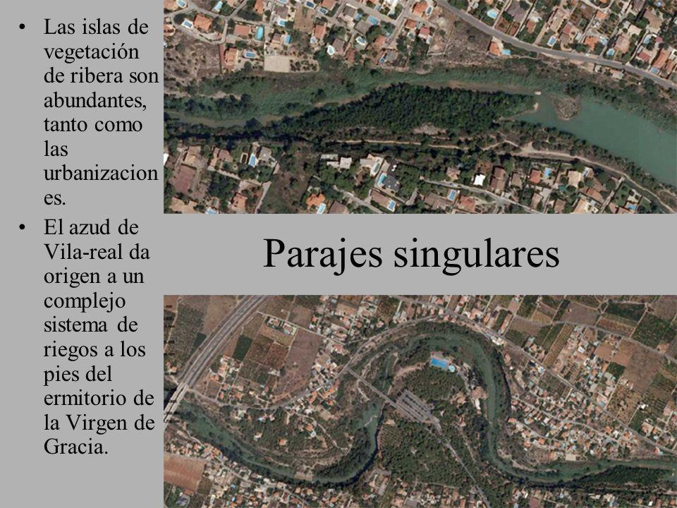 Las islas de vegetación de ribera son abundantes, tanto como las urbanizaciones.