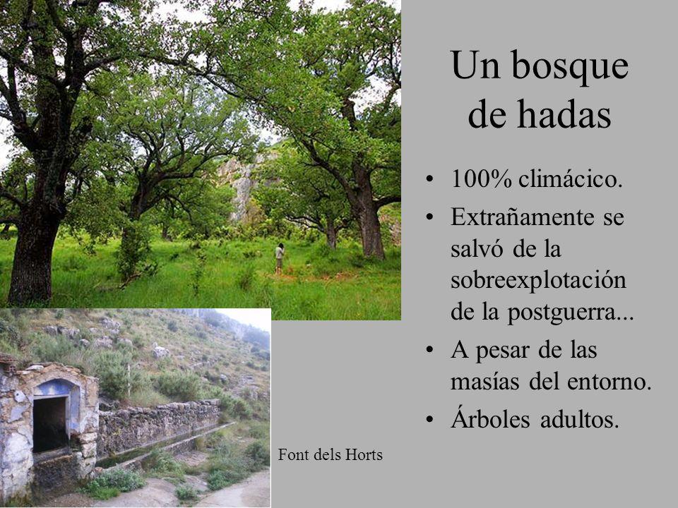 Un bosque de hadas 100% climácico.