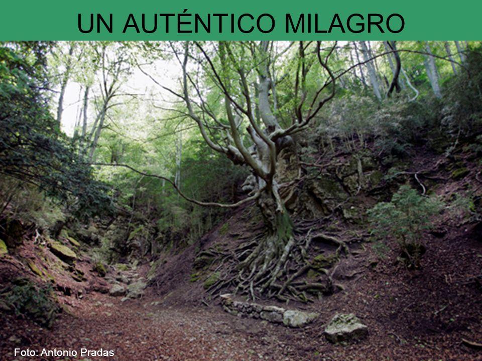 UN AUTÉNTICO MILAGRO Foto: Antonio Pradas