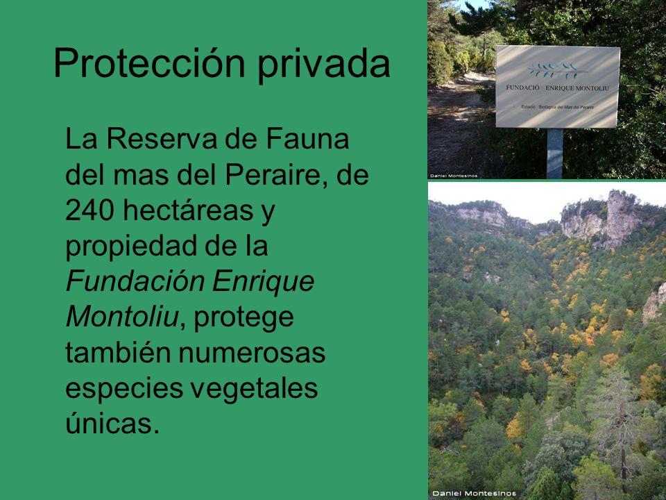 Protección privada