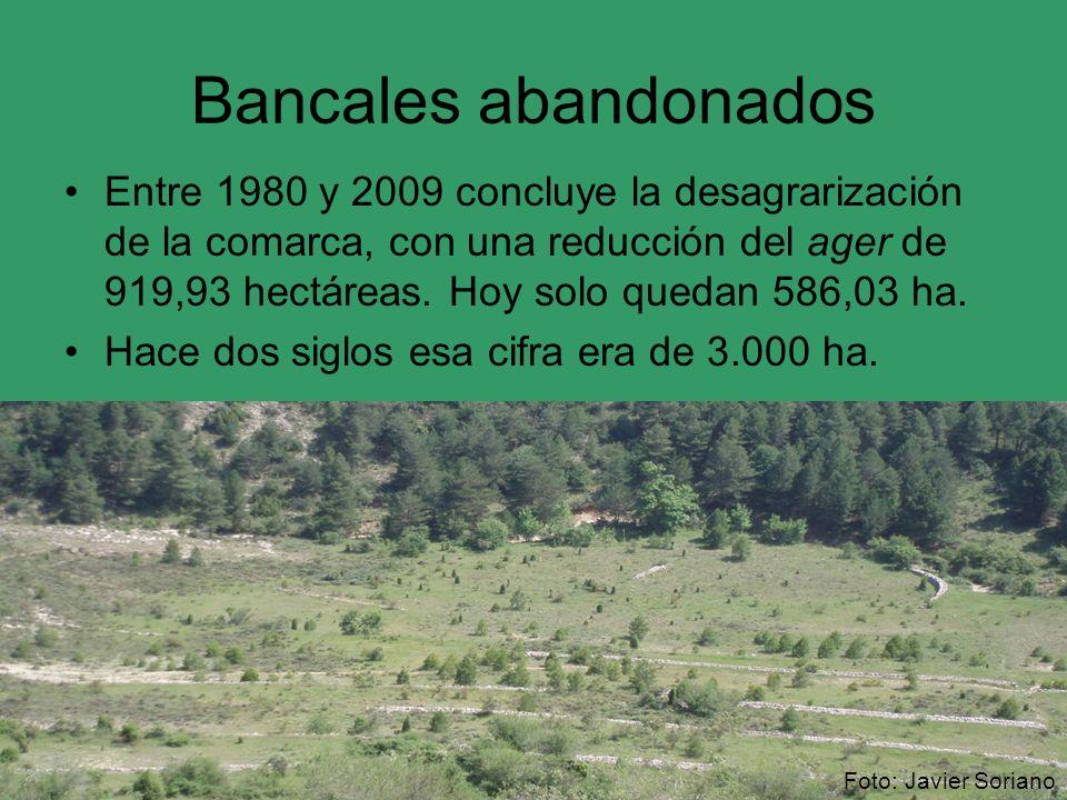 Bancales abandonados