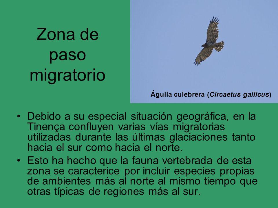 Zona de paso migratorio