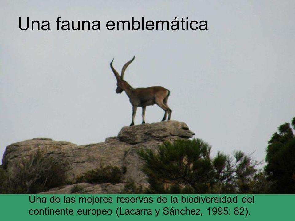 Una fauna emblemática Una de las mejores reservas de la biodiversidad del continente europeo (Lacarra y Sánchez, 1995: 82).