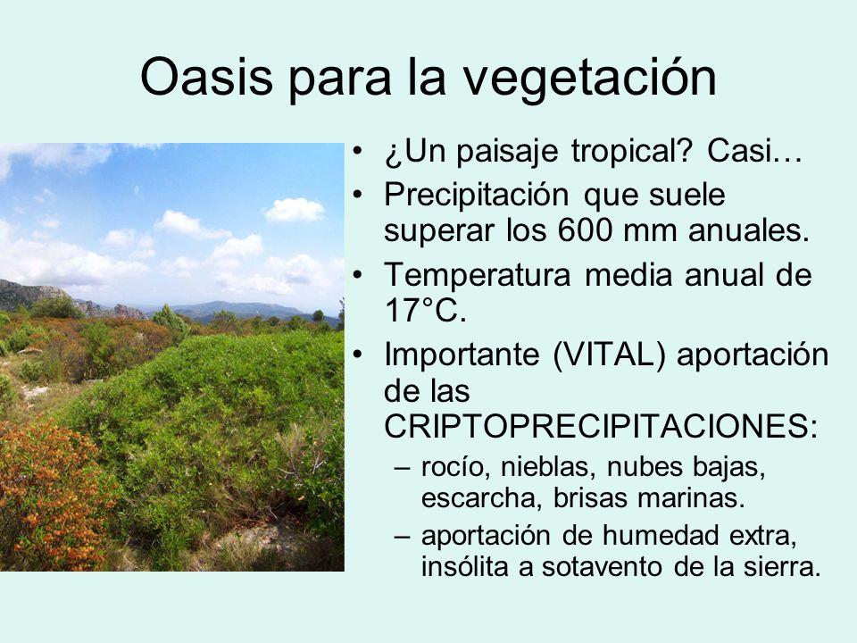 Oasis para la vegetación