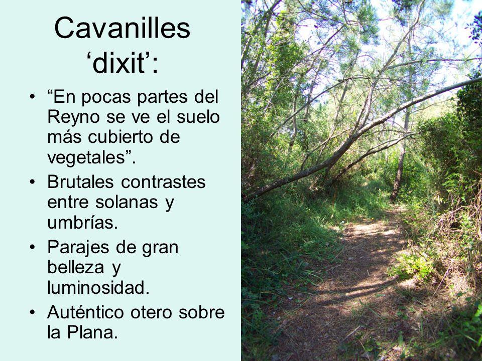 Cavanilles 'dixit': En pocas partes del Reyno se ve el suelo más cubierto de vegetales . Brutales contrastes entre solanas y umbrías.