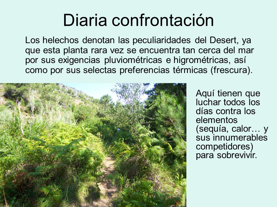 Diaria confrontación